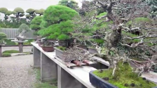Bishopsford Bonsai Garden