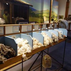 塔斯馬尼亞羊毛中心用戶圖片