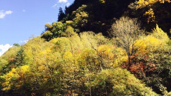我们十月底去的、从米亚罗到马尔康一路风景很漂亮、山上红叶、黄
