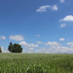 Mild Seven Hill User Photo