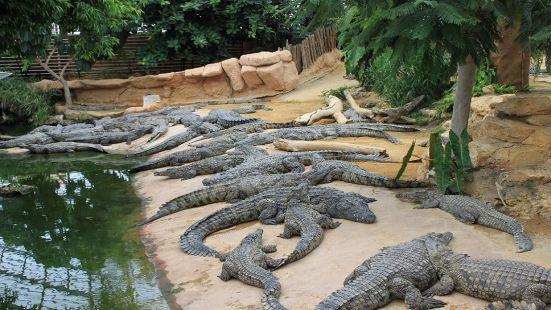 法國鱷魚農場