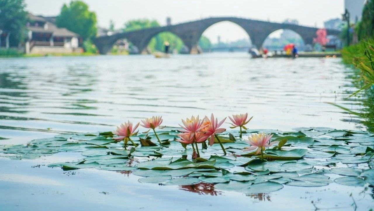 【杭州遊玩】古鎮塘栖不需要門票,遊廣濟橋吃糕點採摘枇杷