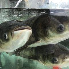 魚吃漁醉湖鮮館用戶圖片