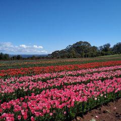 Emu Valley Rhododendron Garden User Photo