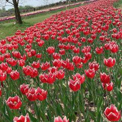 岩藤農場用戶圖片