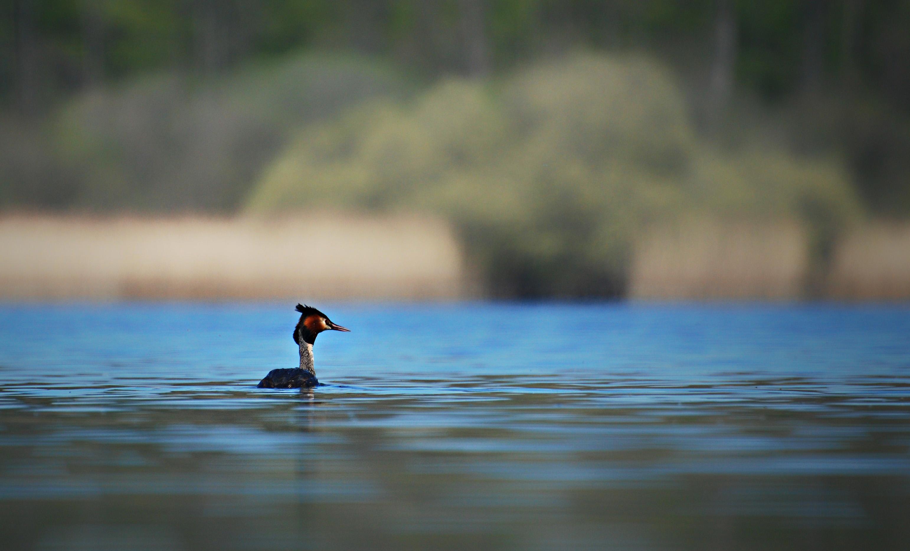 Lake of Virelles (Lac de Virelles)