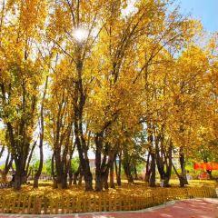 貢覺林卡用戶圖片