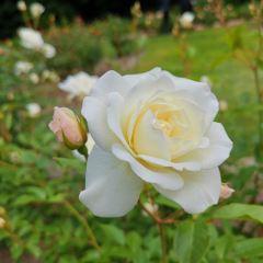 北海道大學植物園用戶圖片