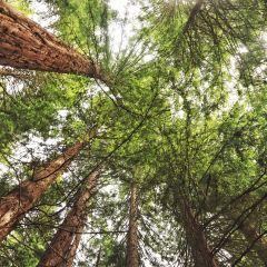 紅木森林公園用戶圖片