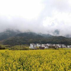 思溪延村賞油菜花海用戶圖片
