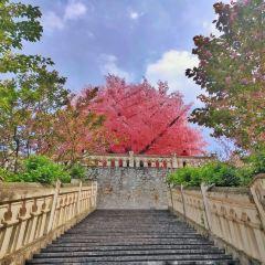 Bailu Town User Photo