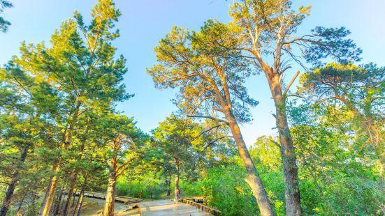 海拉爾國家森林公園