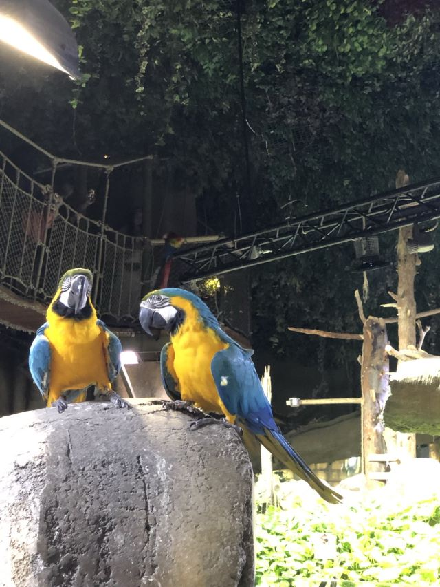 두바이 아쿠아리움과 수중 동물원