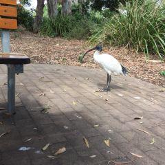 Hervey Bay Botanical Gardens用戶圖片