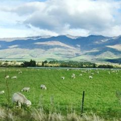 Wanaka User Photo