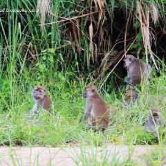 馬廖盆地保護區用戶圖片