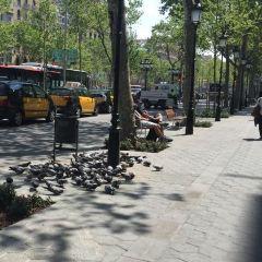 Passeig del Colom User Photo