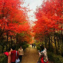 吉林伊通火山群國家級自然保護區用戶圖片