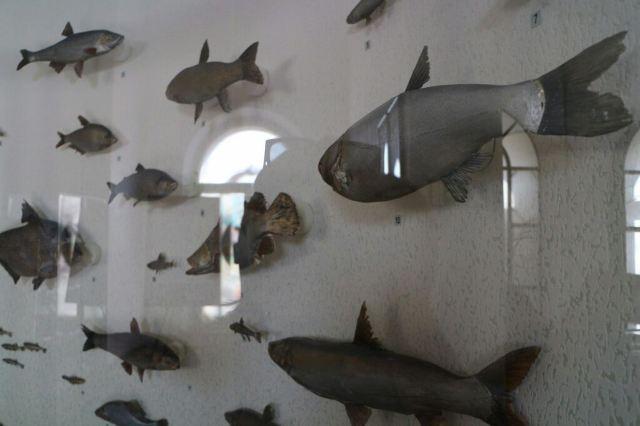 布拉戈維申斯克市地質博物館