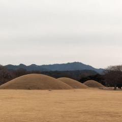 신라오릉 여행 사진