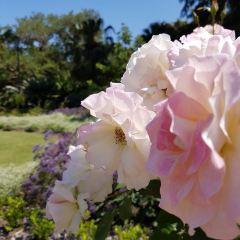 布里斯本植物园用戶圖片