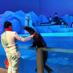 大連聖亞海洋世界海豚表演用戶圖片