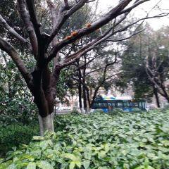 Shuishang Xiansi Lin User Photo