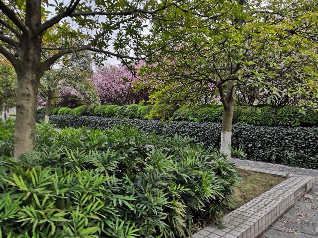 布雷拉植物園