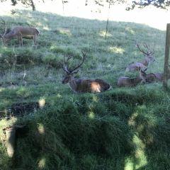 Cambridge Farmstay User Photo