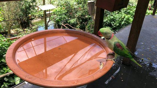 库兰达是澳大利亚最著名的森林公园,而这里的雀鸟世界这是一处鸟