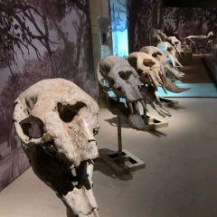 Hezheng Gudongwu Huashi Museum User Photo