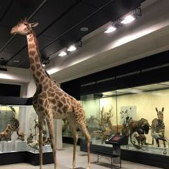 Zoological Museum User Photo