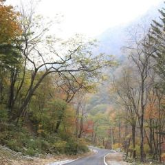 Dutasan Recreational Forest User Photo