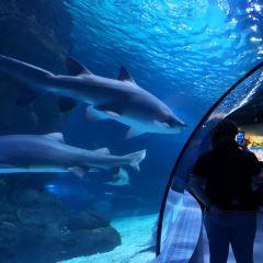 Changfeng Ocean World User Photo