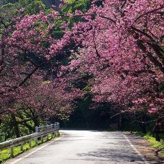 今帰仁城跡のユーザー投稿写真