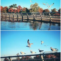 法拉盛草地公園用戶圖片