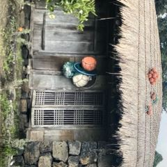 Jeju Folklore & Natural Museum User Photo