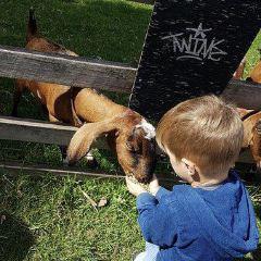 Collingwood Children's Farm User Photo