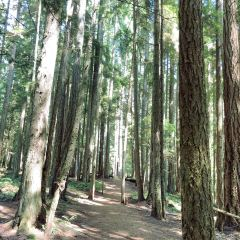 Heritage Forest User Photo