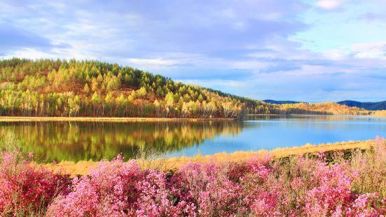 達爾濱湖國家森林公園