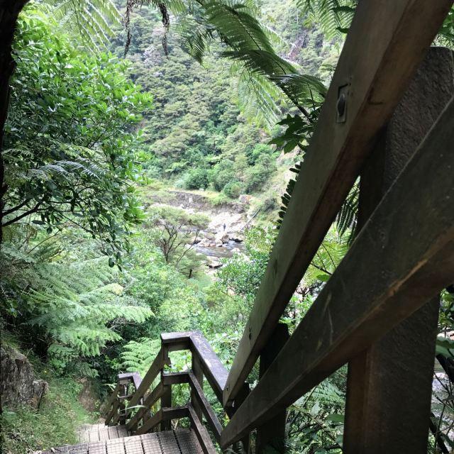 Redwoods, Whakarewarewa Forest