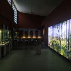 National Museum of Tanzania User Photo
