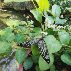 Entopia by Penang Butterfly Farm User Photo