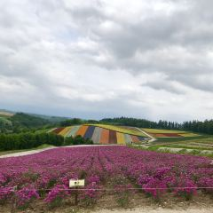 Shikisai no Oka User Photo