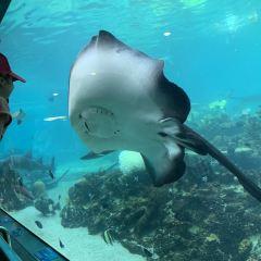 Gold Coast Sea World User Photo