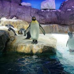 大阪海遊館用戶圖片