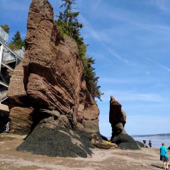 Hopewell Rocks User Photo