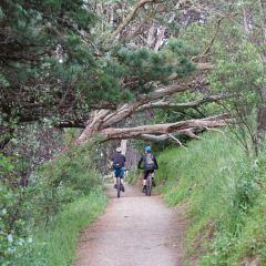 Mount York Lookout User Photo