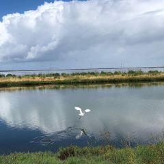 Baylands Park用戶圖片