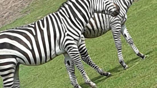 多特蒙德動物園